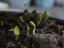 Rich compost provides nutrients for your vegetables.