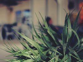 Plants help keep the air clean