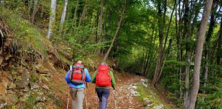 Nordic walking is a whole body workout